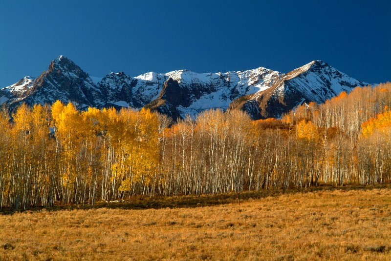 Mountain scenery and Aspen trees