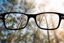 eye glasses with view into forest, one clear one blurry