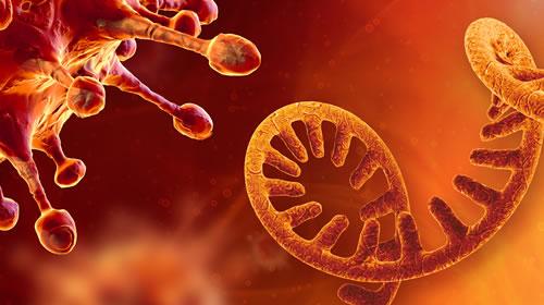 Coronavirus and RNA (500 x 280)